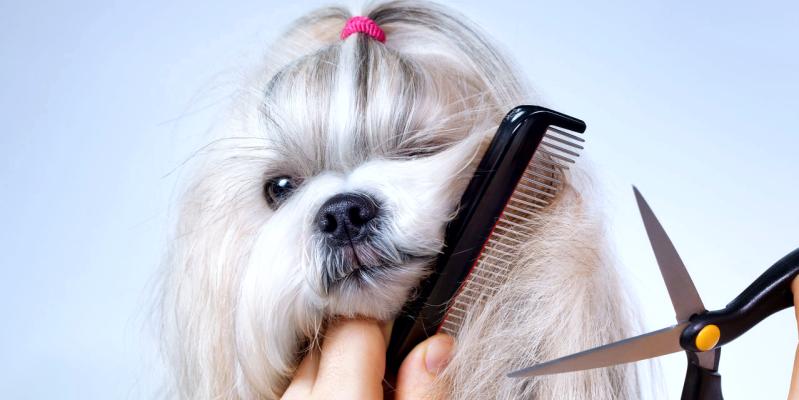 Грумер, парикмахер для животных как называется