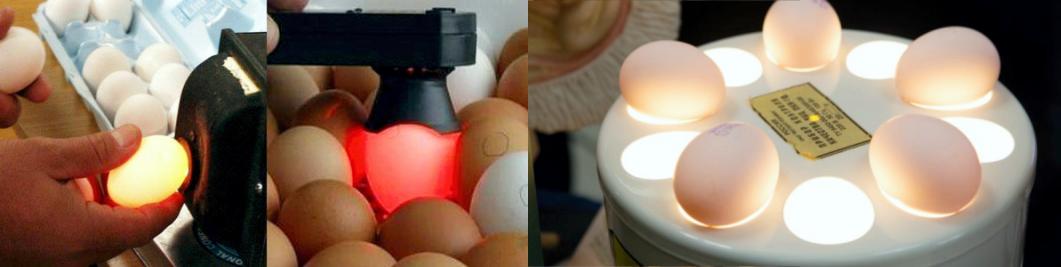 Как называется прибор для проверки яиц на свежесть, овоскоп виды